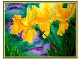 yellow daffodils 1